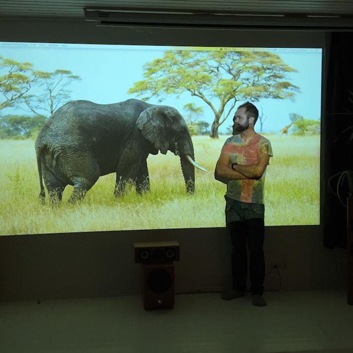 Bild eines Elefanten projiziert auf Buerowand 2